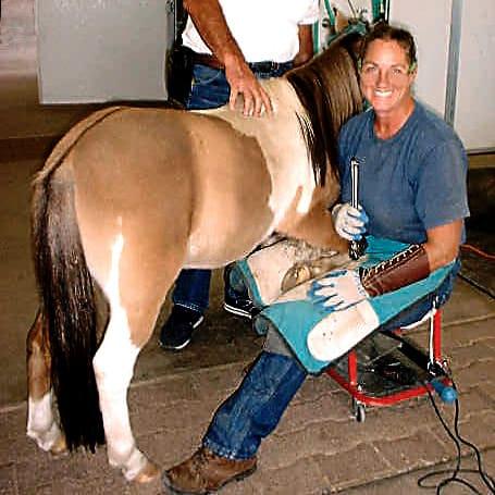 Treating Founder Chronic Laminitis Without Horseshoes 15